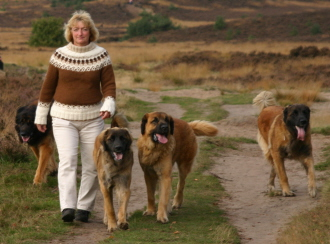 Wilma walking with the dogs